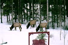 Winter Guests at Off our Rockies bed and breakfast